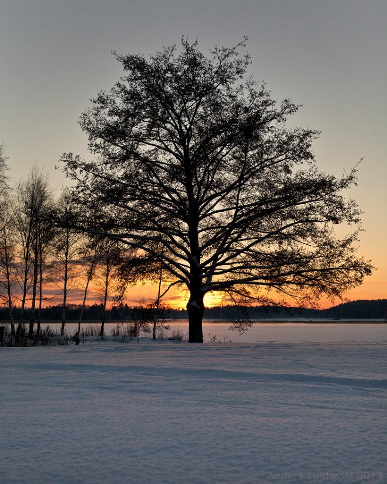 _MG_6097-Solnedgång i december