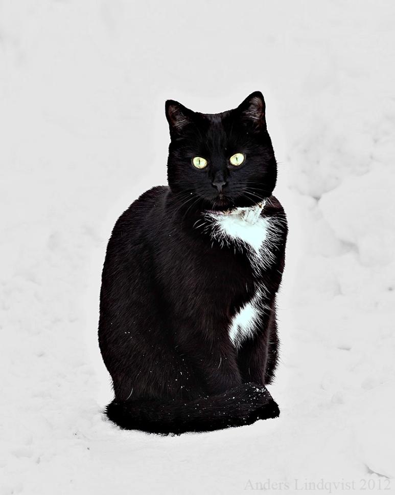 _MG_7139 katten