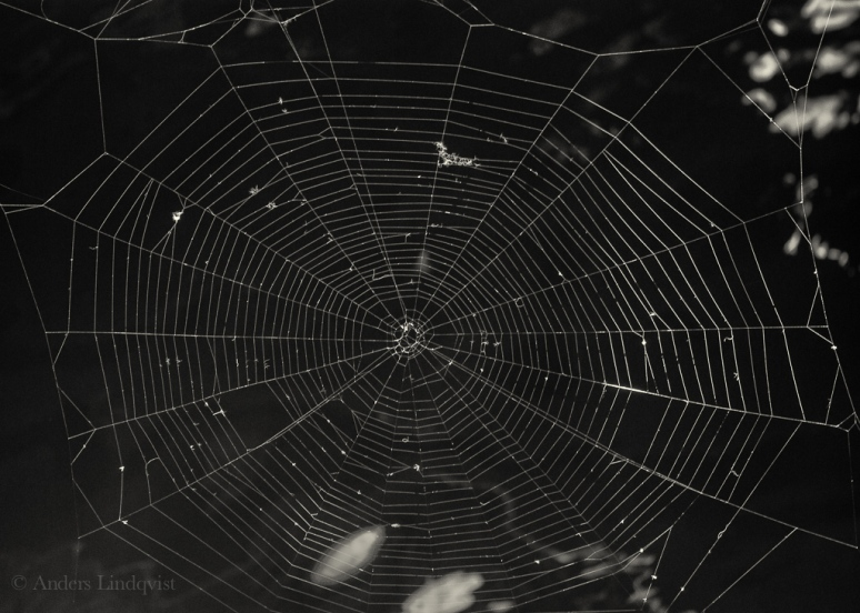 Spindelnät-1