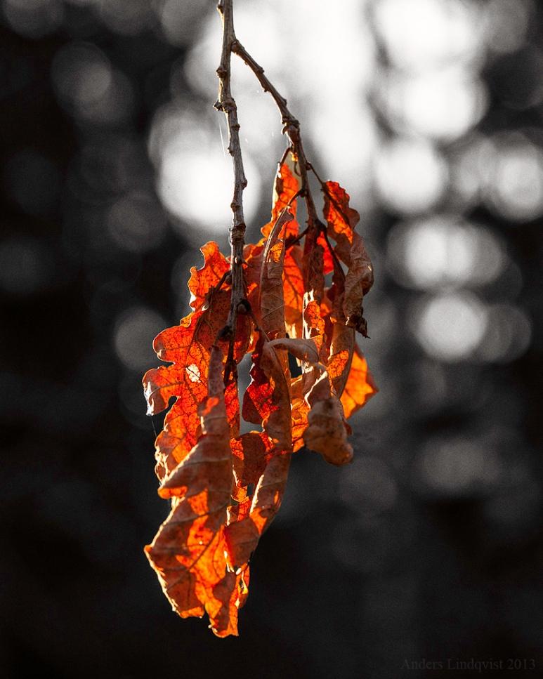 MG 9133 foliage