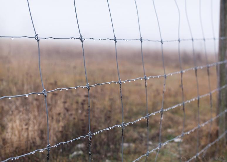 _MG_9616-2 Fence