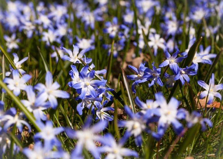 _MG_9949 Spring-vår tif