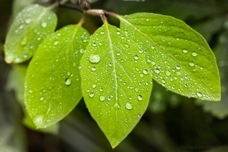 _MG_0641 Rain drops