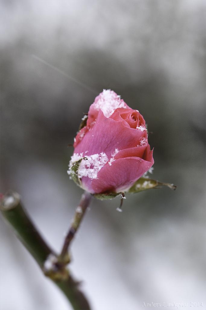 _MG_1672 Snowfall