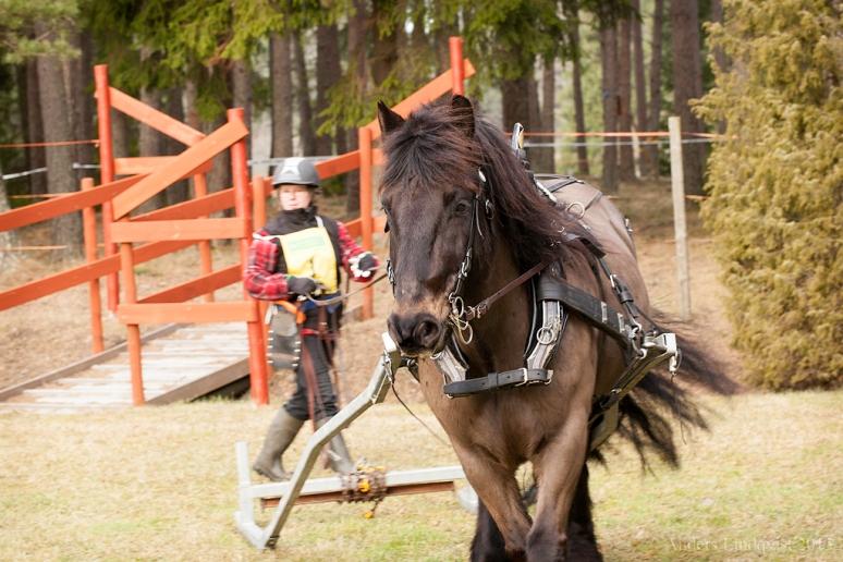 _MG_1844 DM Skogskörning med häst 2015