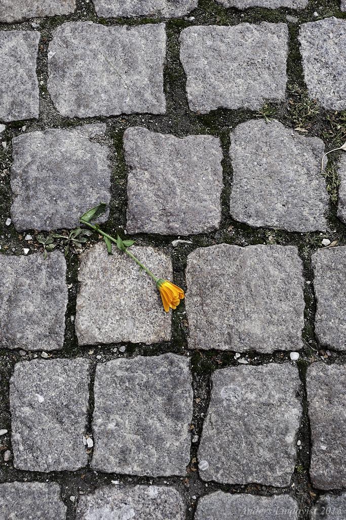 _MG_3222 cobblestone