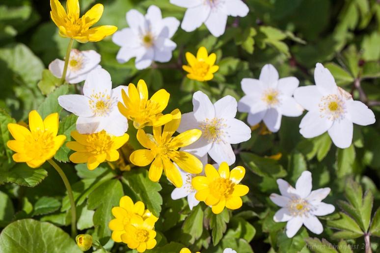 _MG_3595 Vår, Spring