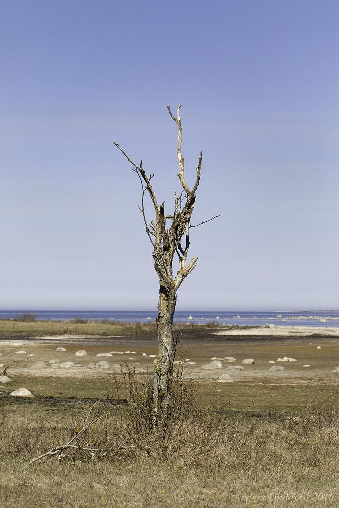 _MG_3652 Träd 3